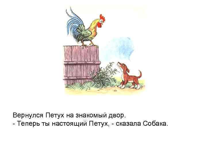 Вернулся Петух на знакомый двор. - Теперь ты настоящий Петух, - сказала Собака.