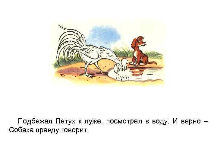 Подбежал Петух к луже, посмотрел в воду. И верно – Собака правду говорит.
