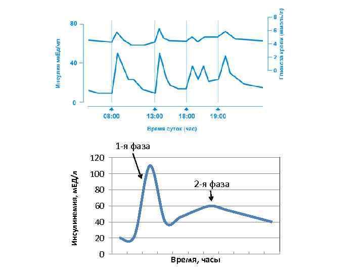 1 -я фаза Инсулинемия, м. ЕД/л 120 100 80 2 -я фаза 60 40