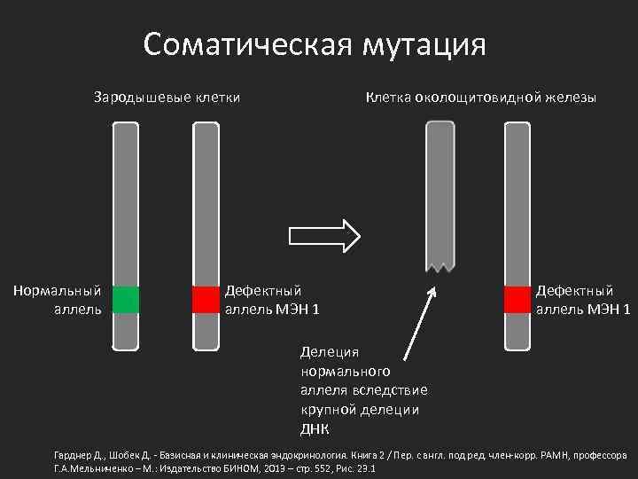 Соматическая мутация Зародышевые клетки Нормальный аллель Клетка околощитовидной железы Дефектный аллель МЭН 1 Делеция