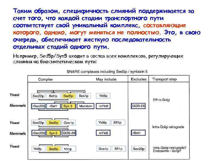 Таким образом, специфичность слияний поддерживается за счет того, что каждой стадии транспортного пути соответствует