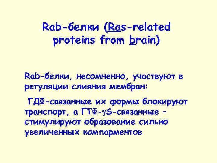 Rab-белки (Ras-related proteins from brain) Rab-белки, несомненно, участвуют в регуляции слияния мембран: ГДФ-связанные их