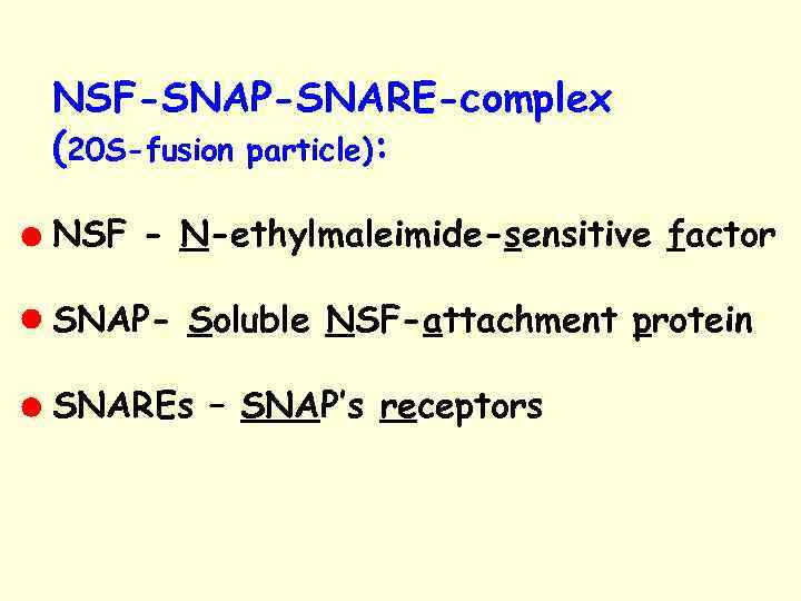 NSF-SNAP-SNARE-complex (20 S-fusion particle): NSF - N-ethylmaleimide-sensitive factor SNAP- Soluble NSF-attachment protein SNAREs –