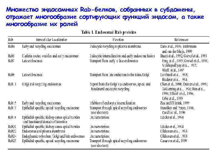 Множество эндосомных Rab-белков, собранных в субдомены, отражает многообразие сортирующих функций эндосом, а также многообразие