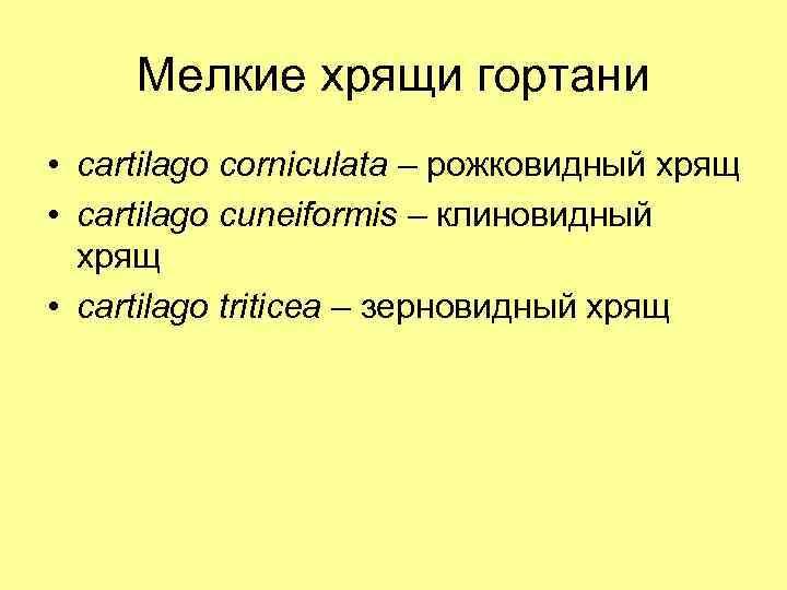 Мелкие хрящи гортани • cartilago corniculata – рожковидный хрящ • cartilago cuneiformis – клиновидный
