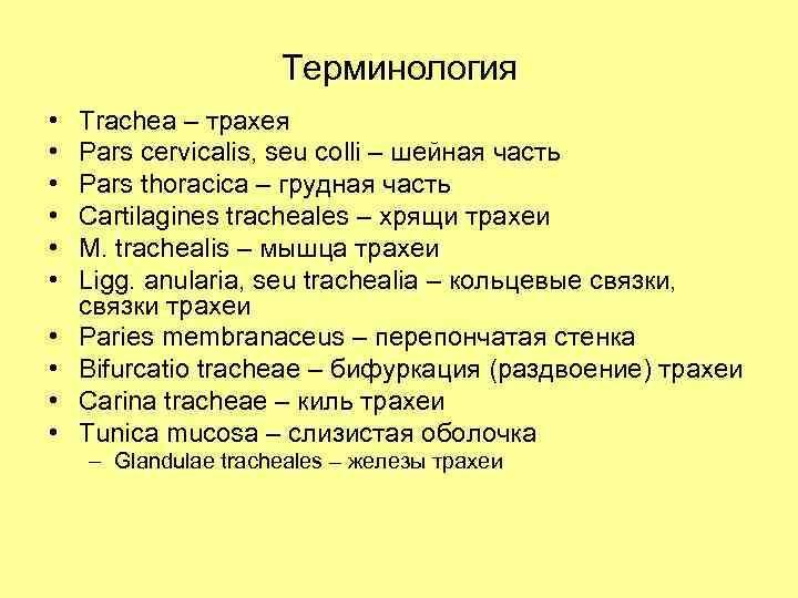 Терминология • • • Trachea – трахея Pars cervicalis, seu colli – шейная часть