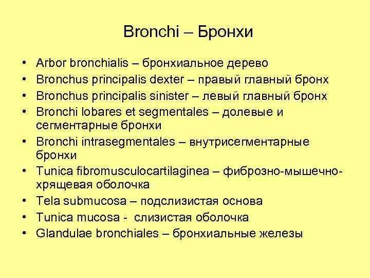 Bronchi – Бронхи • • • Arbor bronchialis – бронхиальное дерево Bronchus principalis dexter