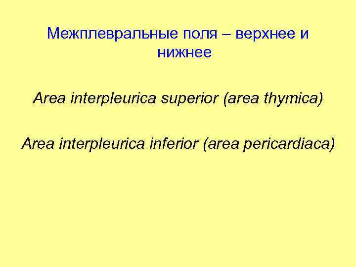 Межплевральные поля – верхнее и нижнее Area interpleurica superior (area thymica) Area interpleurica inferior