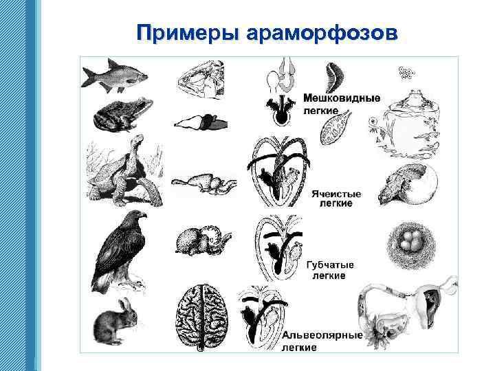 Примеры араморфозов www. themegallery. com