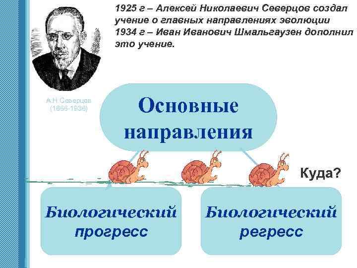 1925 г – Алексей Николаевич Северцов создал учение о главных направлениях эволюции 1934 г