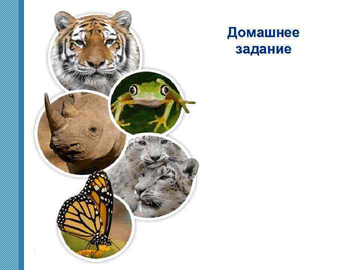 Домашнее задание www. themegallery. com