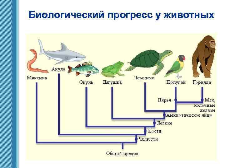 Биологический прогресс у животных www. themegallery. com