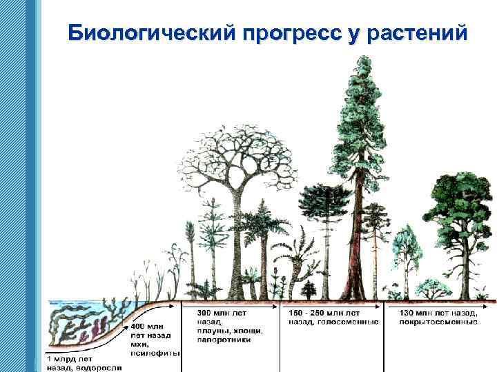 Биологический прогресс у растений www. themegallery. com