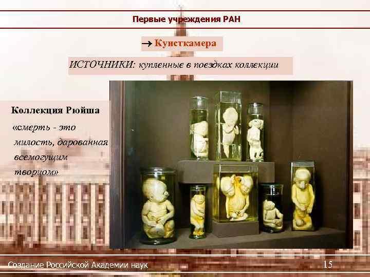 Первые учреждения РАН Кунсткамера ИСТОЧНИКИ: купленные в поездках коллекции Коллекция Рюйша «смерть - это