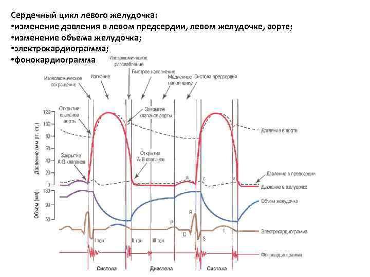 Сердечный цикл левого желудочка: • изменение давления в левом предсердии, левом желудочке, аорте; •