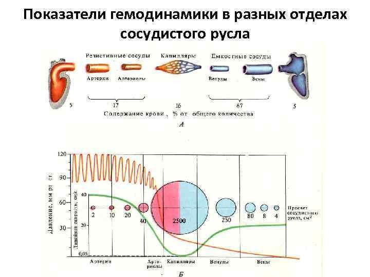 Показатели гемодинамики в разных отделах сосудистого русла