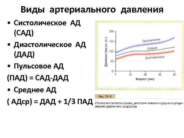 Виды артериального давления • Систолическое АД (САД) • Диастолическое АД (ДАД) • Пульсовое АД