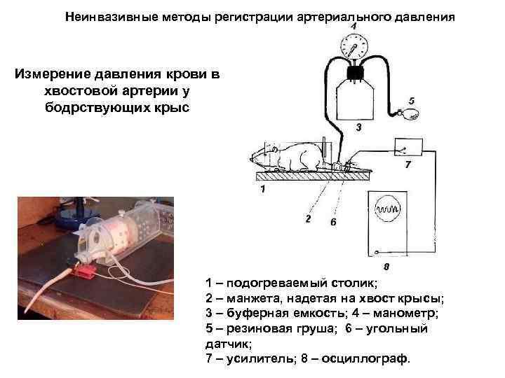 Неинвазивные методы регистрации артериального давления Измерение давления крови в хвостовой артерии у бодрствующих крыс