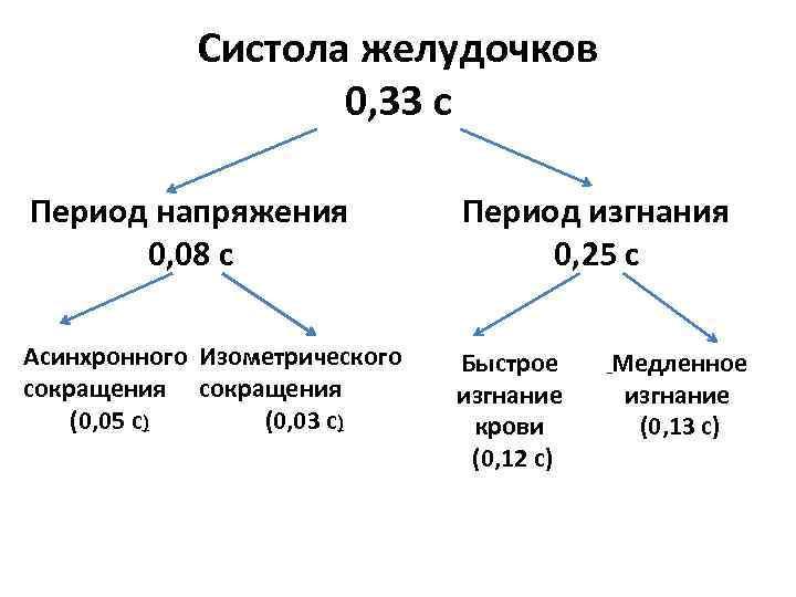 Систола желудочков 0, 33 с Период напряжения 0, 08 с Период изгнания 0, 25