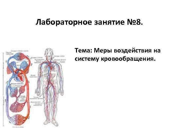 Лабораторное занятие № 8. Тема: Меры воздействия на систему кровообращения.