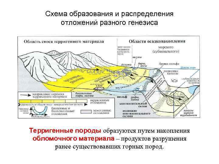 Схема образования и распределения отложений разного генезиса Терригенные породы образуются путем накопления обломочного материала