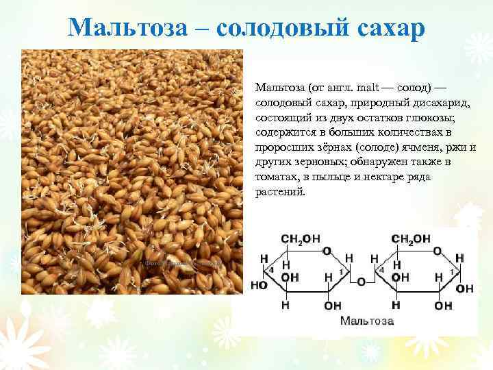 Мальтоза – солодовый сахар Мальтоза (от англ. malt — солод) — солодовый сахар, природный