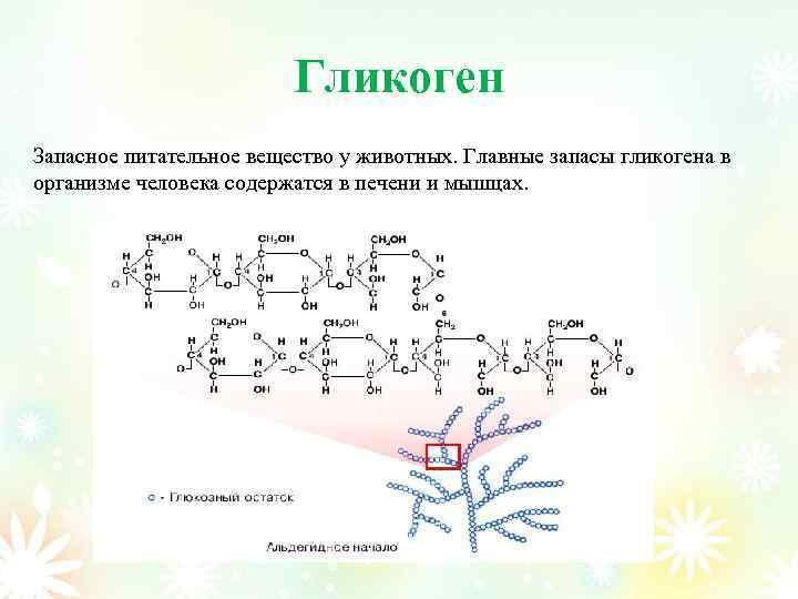 Гликоген Запасное питательное вещество у животных. Главные запасы гликогена в организме человека содержатся в