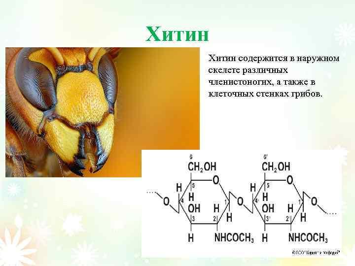 Хитин содержится в наружном скелете различных членистоногих, а также в клеточных стенках грибов.