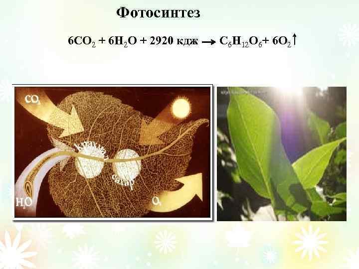 Фотосинтез 6 CO 2 + 6 H 2 O + 2920 кдж C 6