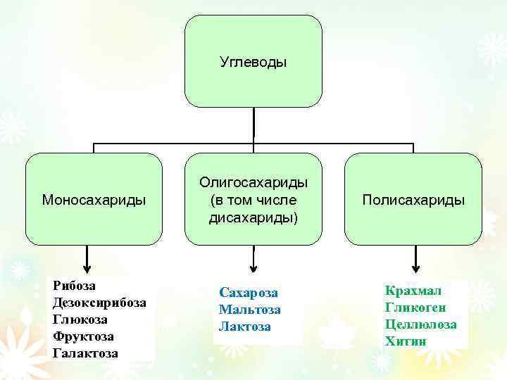 Углеводы Моносахариды Рибоза Дезоксирибоза Глюкоза Фруктоза Галактоза Олигосахариды (в том числе дисахариды) Сахароза Мальтоза