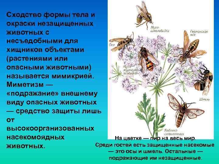 Сходство формы тела и окраски незащищенных животных с несъедобными для хищников объектами (растениями или