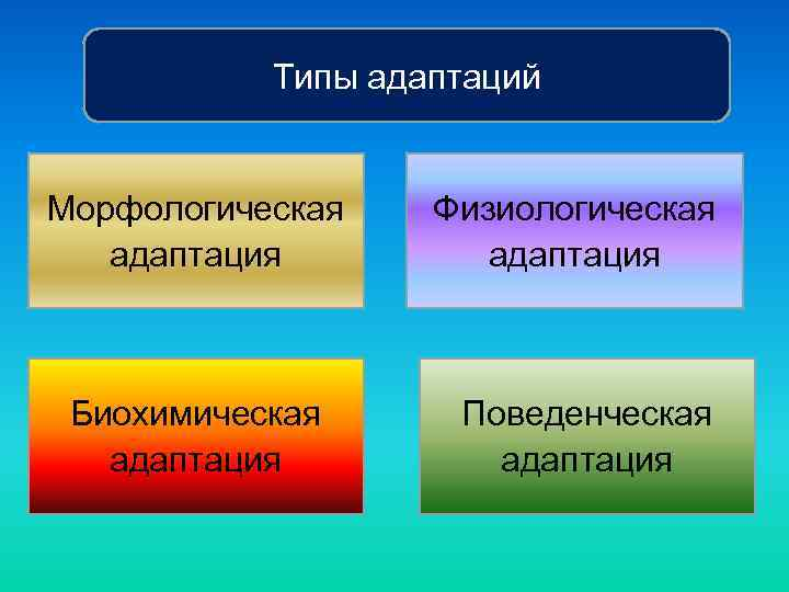 Типы адаптаций Морфологическая адаптация Биохимическая адаптация Физиологическая адаптация Поведенческая адаптация