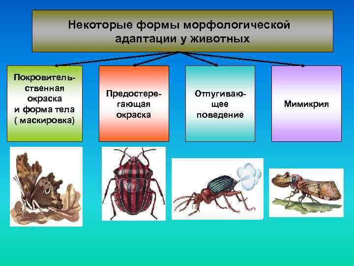 Некоторые формы морфологической адаптации у животных Покровительственная окраска и форма тела ( маскировка) Предостерегающая