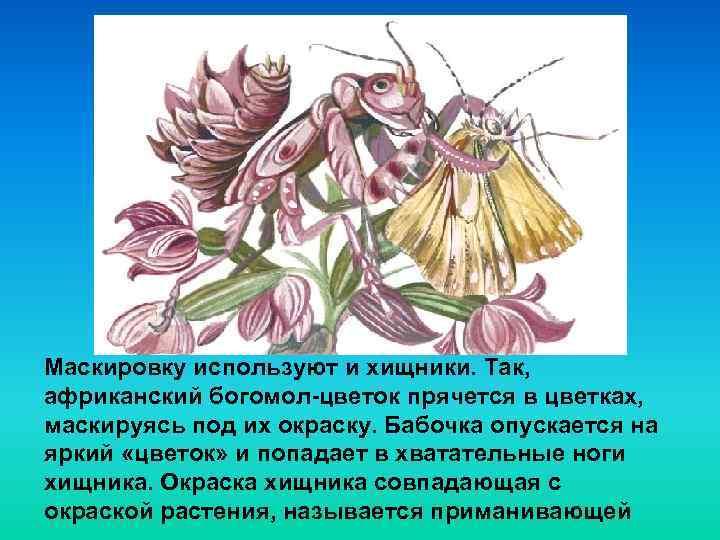 Маскировку используют и хищники. Так, африканский богомол-цветок прячется в цветках, маскируясь под их окраску.