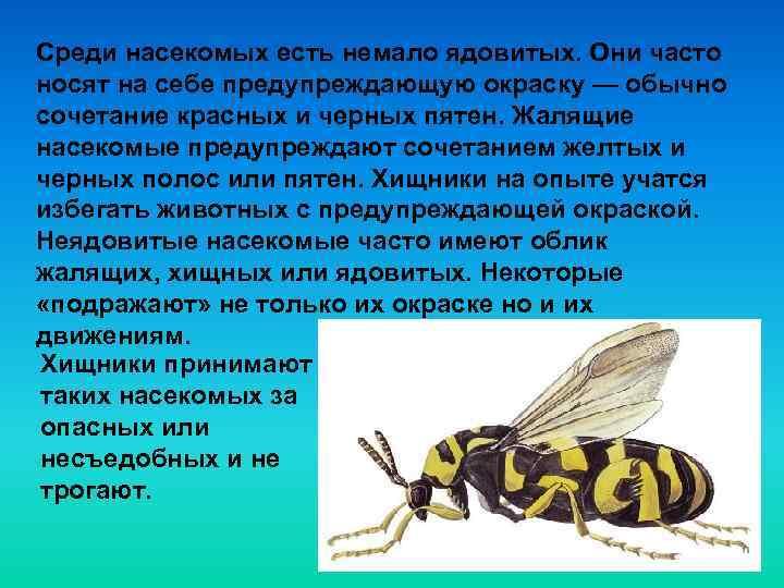 Среди насекомых есть немало ядовитых. Они часто носят на себе предупреждающую окраску — обычно
