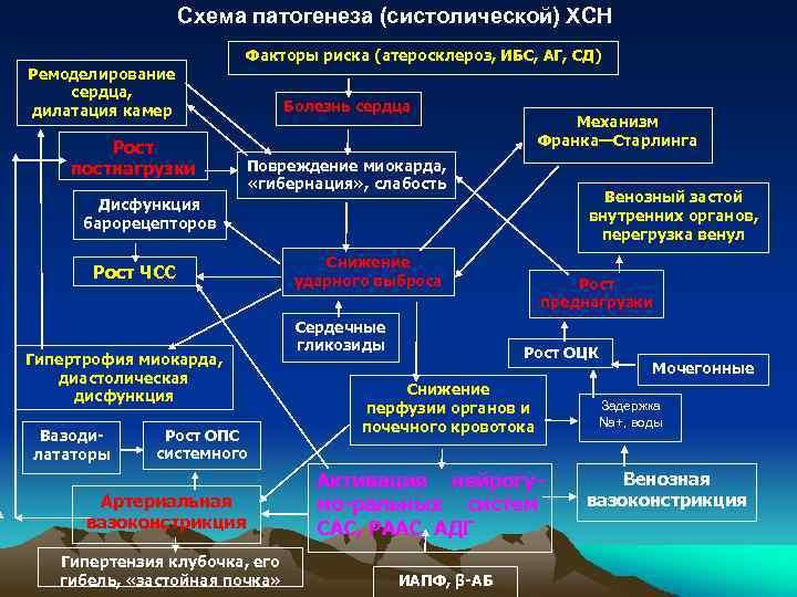 Схема патогенеза (систолической) ХСН Ремоделирование сердца, дилатация камер Рост постнагрузки Факторы риска (атеросклероз, ИБС,