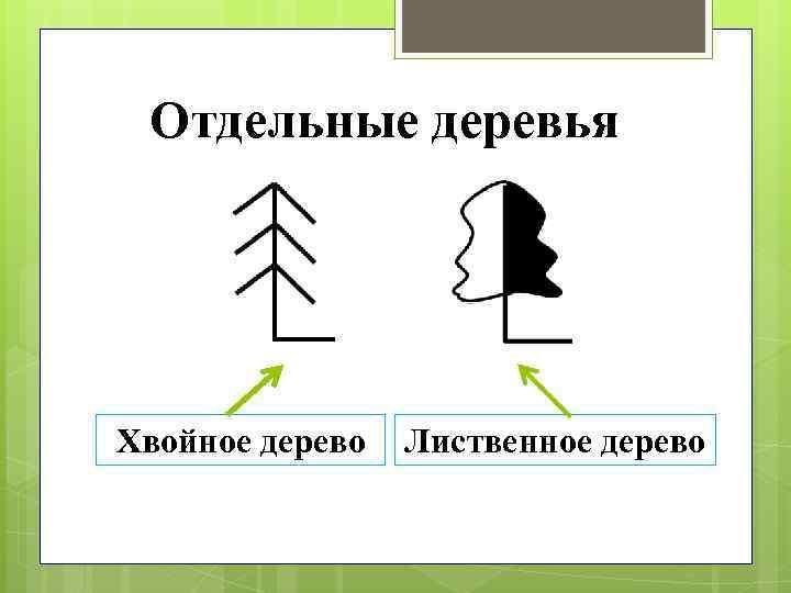 Отдельные деревья Хвойное дерево Лиственное дерево