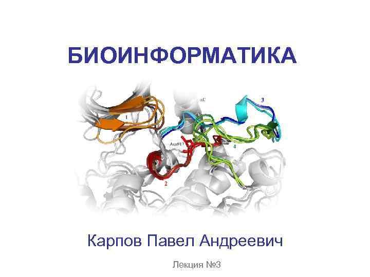 БИОИНФОРМАТИКА Карпов Павел Андреевич Лекция № 3