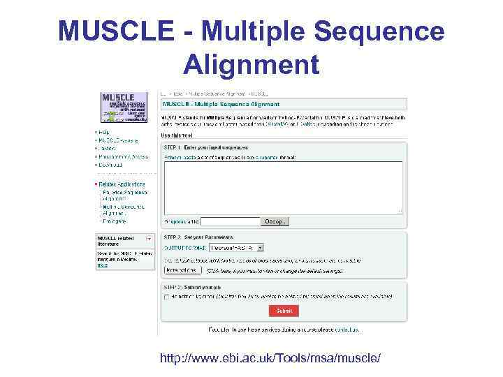 MUSCLE - Multiple Sequence Alignment http: //www. ebi. ac. uk/Tools/msa/muscle/