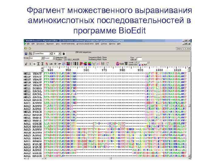 Фрагмент множественного выравнивания аминокислотных последовательностей в программе Bio. Edit