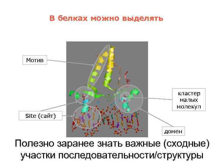В белках можно выделять Мотив кластер малых молекул Site (сайт) домен Полезно заранее знать