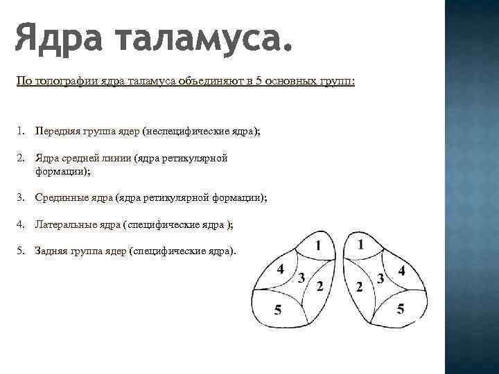 Ядра таламуса. По топографии ядра таламуса объединяют в 5 основных групп: 1. Передняя группа