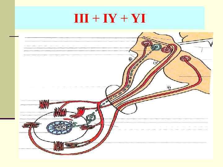 III + IY + YI