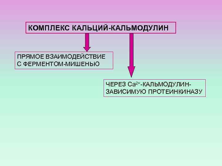 КОМПЛЕКС КАЛЬЦИЙ-КАЛЬМОДУЛИН ПРЯМОЕ ВЗАИМОДЕЙСТВИЕ С ФЕРМЕНТОМ-МИШЕНЬЮ ЧЕРЕЗ Са 2+-КАЛЬМОДУЛИНЗАВИСИМУЮ ПРОТЕИНКИНАЗУ