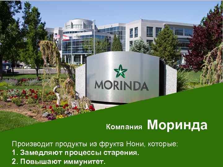 Официальный сайт компании моринда создание сайта в расходы при усн