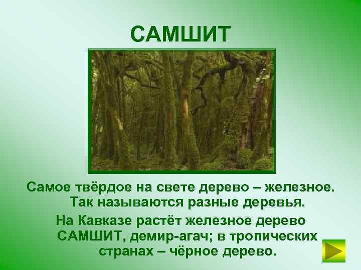 САМШИТ Самое твёрдое на свете дерево – железное. Так называются разные деревья. На Кавказе