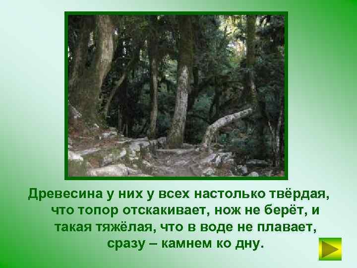 Древесина у них у всех настолько твёрдая, что топор отскакивает, нож не берёт, и