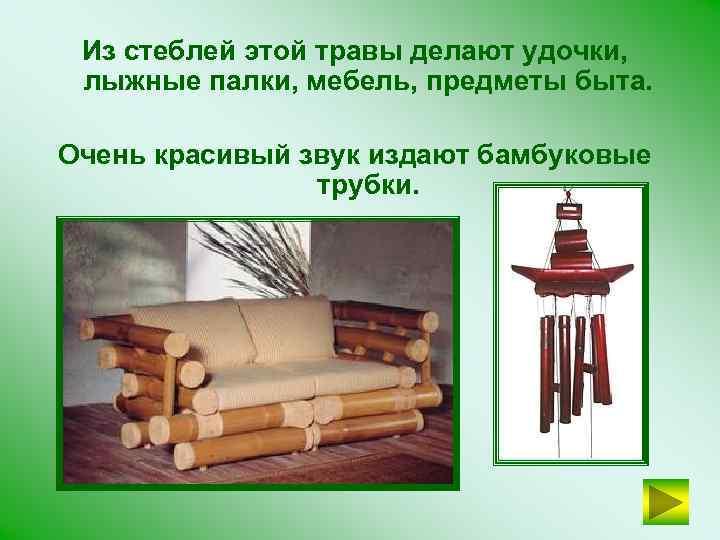 Из стеблей этой травы делают удочки, лыжные палки, мебель, предметы быта. Очень красивый звук
