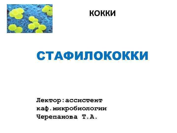 КОККИ СТАФИЛОКОККИ Лектор: ассистент каф. микробиологии Черепанова Т. А.