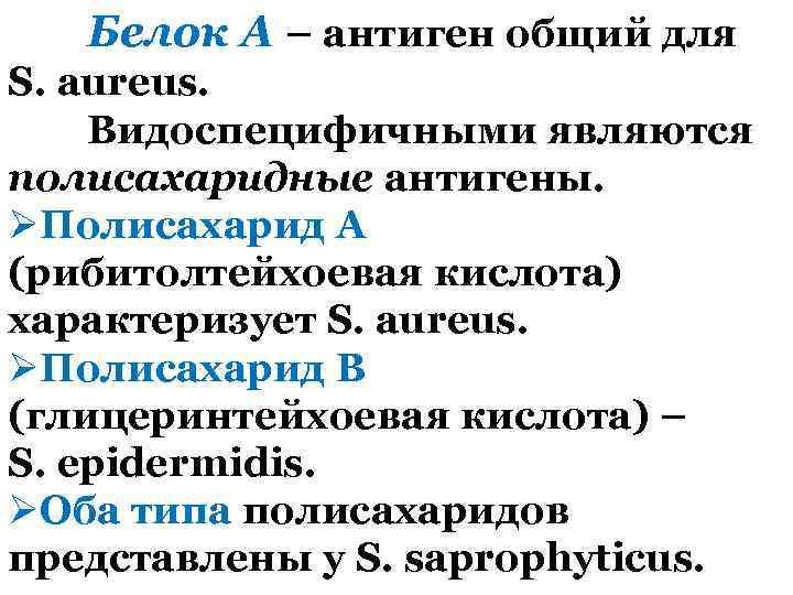 Белок А – антиген общий для S. aureus. Видоспецифичными являются полисахаридные антигены. ØПолисахарид А